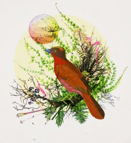 Bird Me